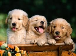 раскраски Собаки